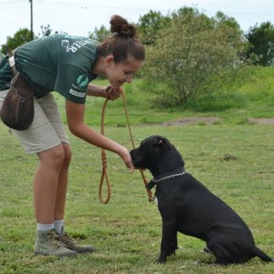 Projects Abroad volunteer helps with dog training during her Animal Care work in Argentina